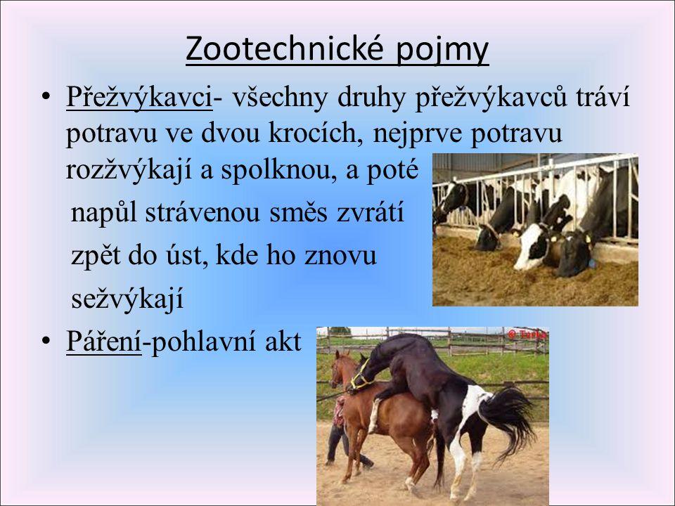 Zootechnické pojmy P řežvýkavci- všechny druhy přežvýkavců tráví potravu ve dvou krocích, nejprve potravu rozžvýkají a spolknou, a poté napůl stráveno