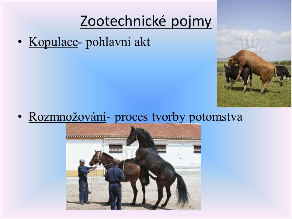 Zootechnické pojmy Kopulace- pohlavní akt Rozmnožování- proces tvorby potomstva