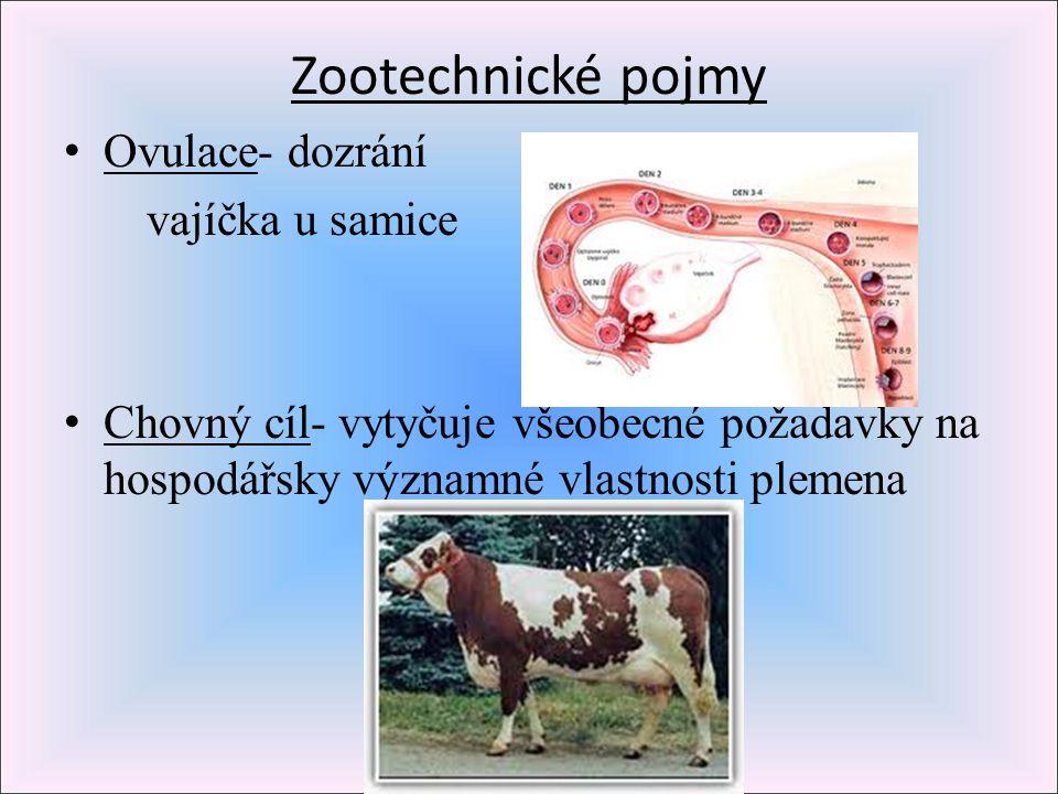 Zootechnické pojmy Ovulace- dozrání vajíčka u samice Chovný cíl- vytyčuje všeobecné požadavky na hospodářsky významné vlastnosti plemena