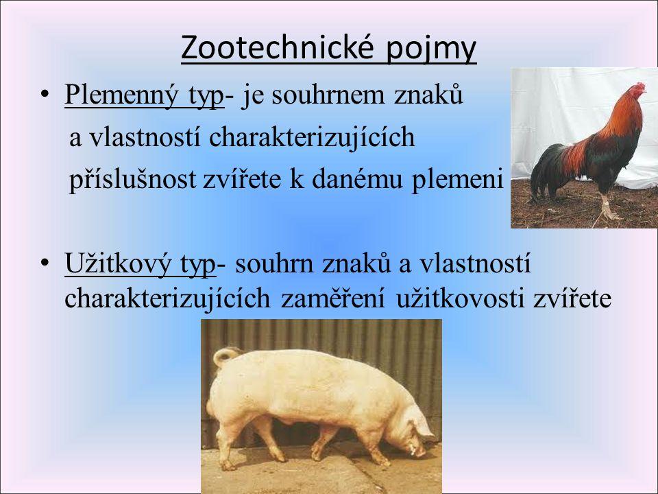 Zootechnické pojmy Plemenný typ- je souhrnem znaků a vlastností charakterizujících příslušnost zvířete k danému plemeni Užitkový typ- souhrn znaků a v
