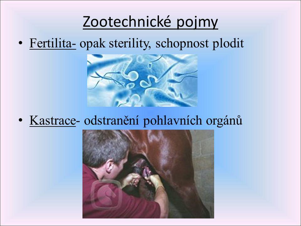 Zootechnické pojmy Fertilita- opak sterility, schopnost plodit Kastrace- odstranění pohlavních orgánů