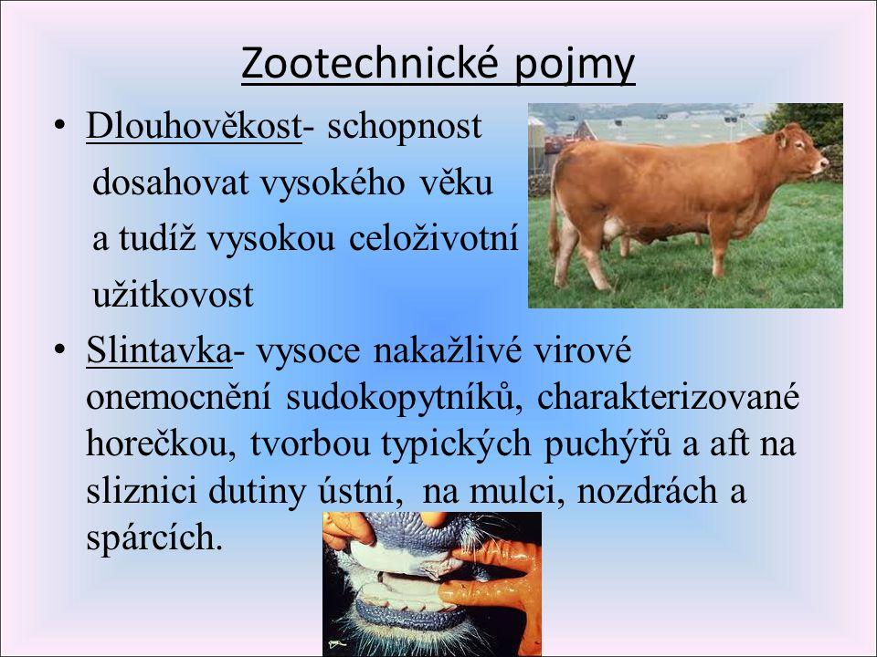 Zootechnické pojmy Dlouhověkost- schopnost dosahovat vysokého věku a tudíž vysokou celoživotní užitkovost Slintavka- vysoce nakažlivé virové onemocněn