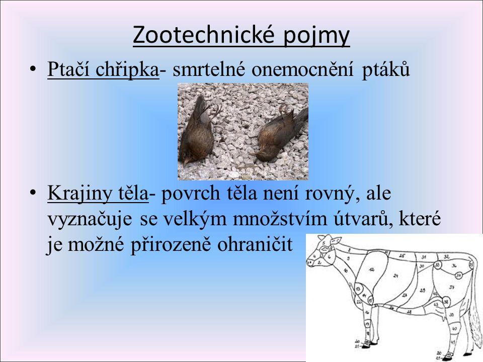 Zootechnické pojmy P tačí chřipka- smrtelné onemocnění ptáků K rajiny těla- povrch těla není rovný, ale vyznačuje se velkým množstvím útvarů, které je