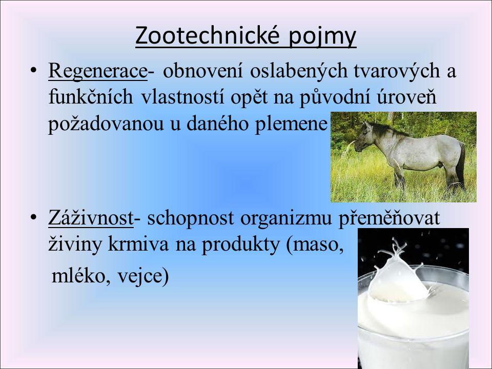 Zootechnické pojmy Regenerace- obnovení oslabených tvarových a funkčních vlastností opět na původní úroveň požadovanou u daného plemene Záživnost- sch