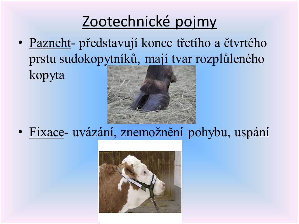 Zootechnické pojmy Pazneht- představují konce třetího a čtvrtého prstu sudokopytníků, mají tvar rozplůleného kopyta Fixace- uvázání, znemožnění pohybu
