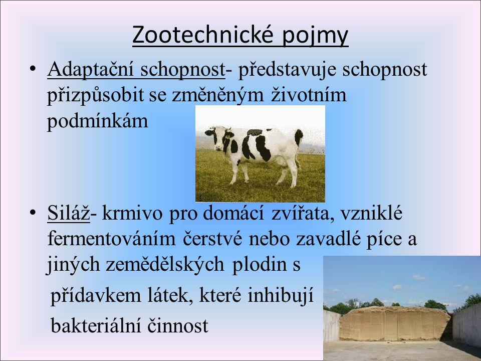 Zootechnické pojmy Adaptační schopnost- představuje schopnost přizpůsobit se změněným životním podmínkám Siláž- krmivo pro domácí zvířata, vzniklé fer