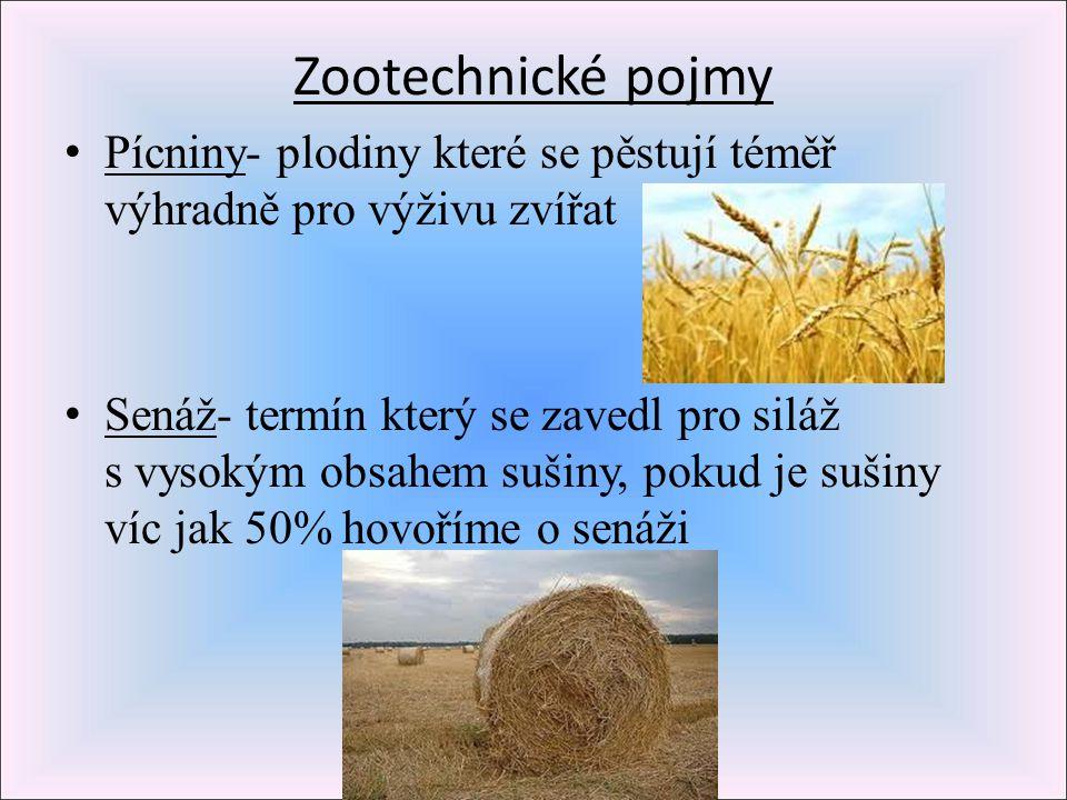 Zootechnické pojmy Pícniny- plodiny které se pěstují téměř výhradně pro výživu zvířat Senáž- termín který se zavedl pro siláž s vysokým obsahem sušiny