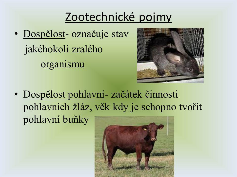 Zootechnické pojmy Dospělost- označuje stav jakéhokoli zralého organismu Dospělost pohlavní- začátek činnosti pohlavních žláz, věk kdy je schopno tvoř