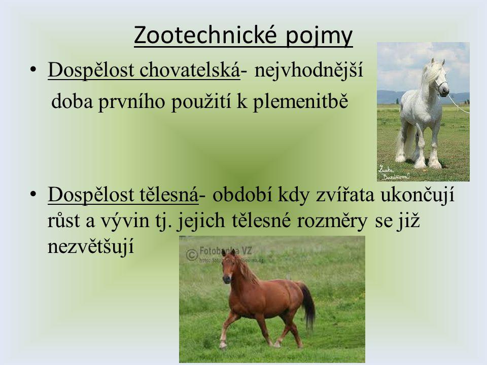 Zootechnické pojmy Dospělost chovatelská- nejvhodnější doba prvního použití k plemenitbě Dospělost tělesná- období kdy zvířata ukončují růst a vývin t