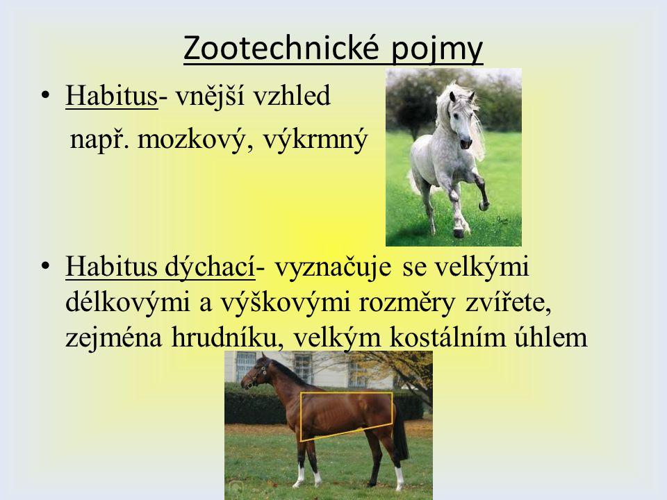 Zootechnické pojmy Habitus- vnější vzhled např. mozkový, výkrmný Habitus dýchací- vyznačuje se velkými délkovými a výškovými rozměry zvířete, zejména