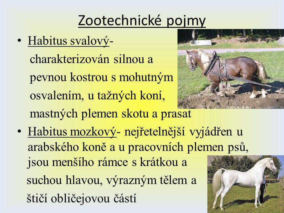 Zootechnické pojmy Habitus svalový- charakterizován silnou a pevnou kostrou s mohutným osvalením, u tažných koní, mastných plemen skotu a prasat Habit