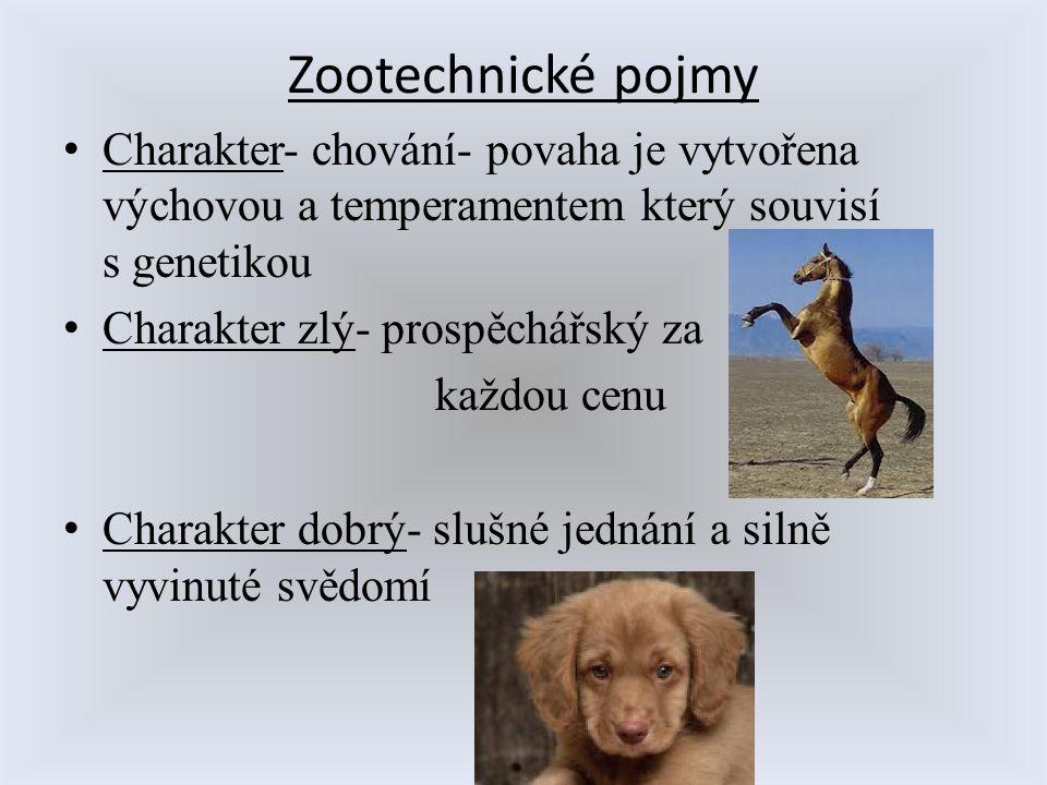 Zootechnické pojmy Charakter- chování- povaha je vytvořena výchovou a temperamentem který souvisí s genetikou Charakter zlý- prospěchářský za každou c