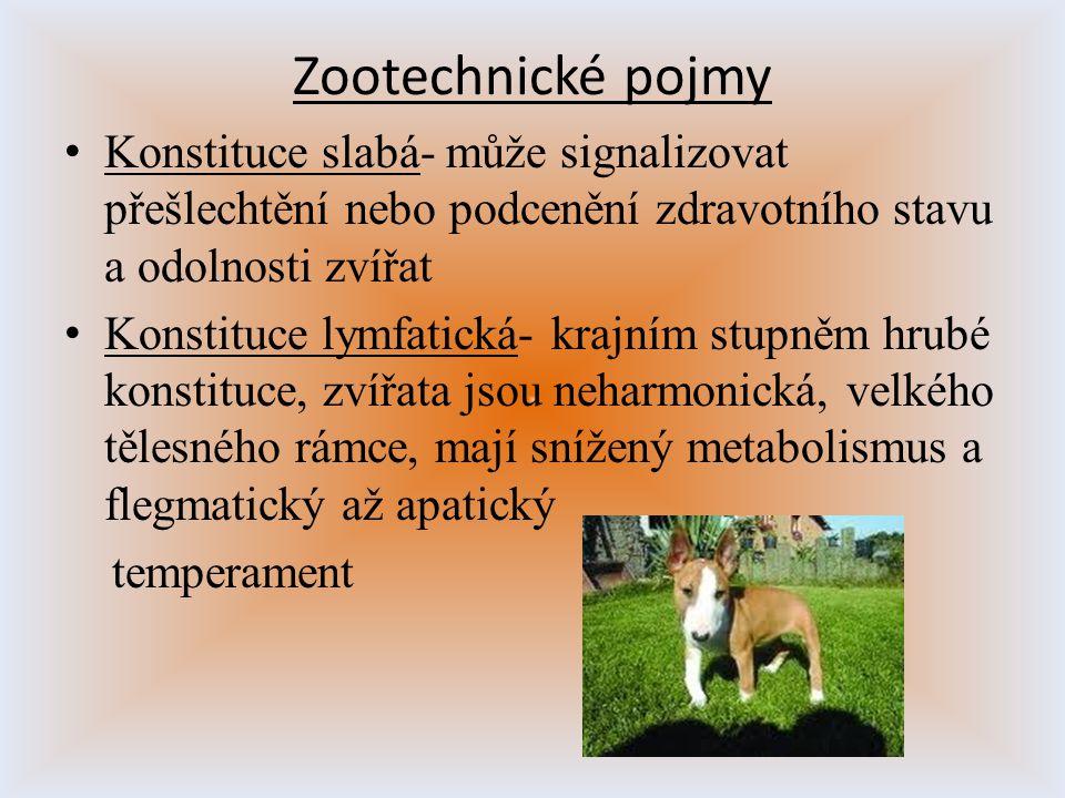 Zootechnické pojmy Konstituce slabá- může signalizovat přešlechtění nebo podcenění zdravotního stavu a odolnosti zvířat Konstituce lymfatická- krajním