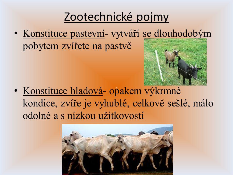 Konstituce pastevní- vytváří se dlouhodobým pobytem zvířete na pastvě Konstituce hladová- opakem výkrmné kondice, zvíře je vyhublé, celkově sešlé, mál