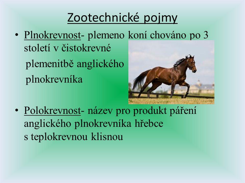 Zootechnické pojmy Plnokrevnost- plemeno koní chováno po 3 století v čistokrevné plemenitbě anglického plnokrevníka Polokrevnost- název pro produkt pá