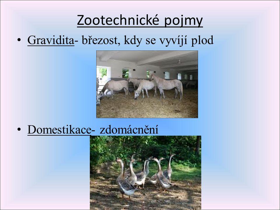 Zootechnické pojmy Gravidita- březost, kdy se vyvíjí plod Domestikace- zdomácnění