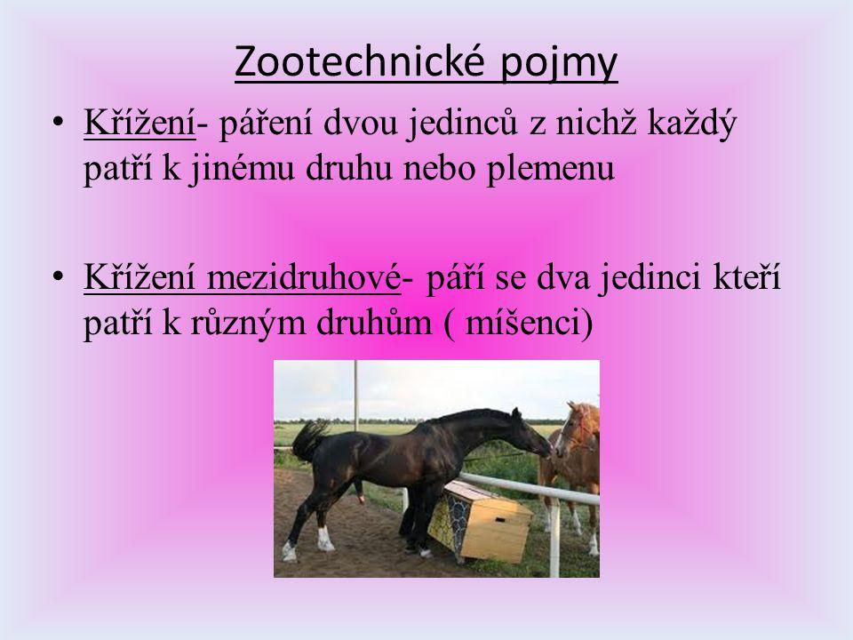 Zootechnické pojmy K řížení- páření dvou jedinců z nichž každý patří k jinému druhu nebo plemenu K řížení mezidruhové- páří se dva jedinci kteří patří