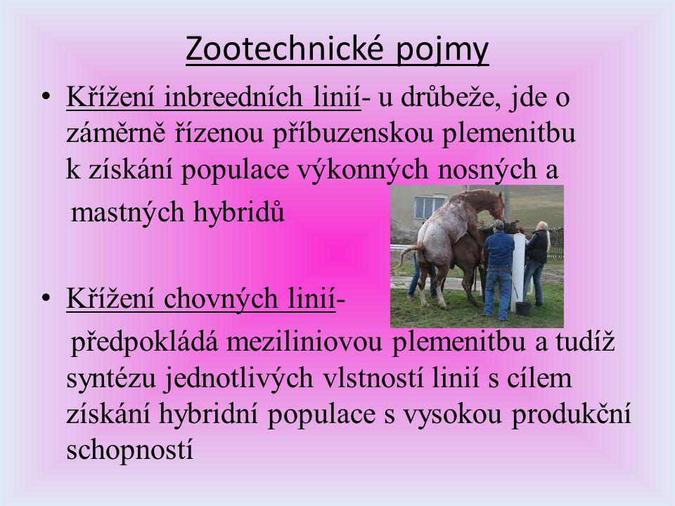 Zootechnické pojmy Křížení inbreedních linií- u drůbeže, jde o záměrně řízenou příbuzenskou plemenitbu k získání populace výkonných nosných a mastných