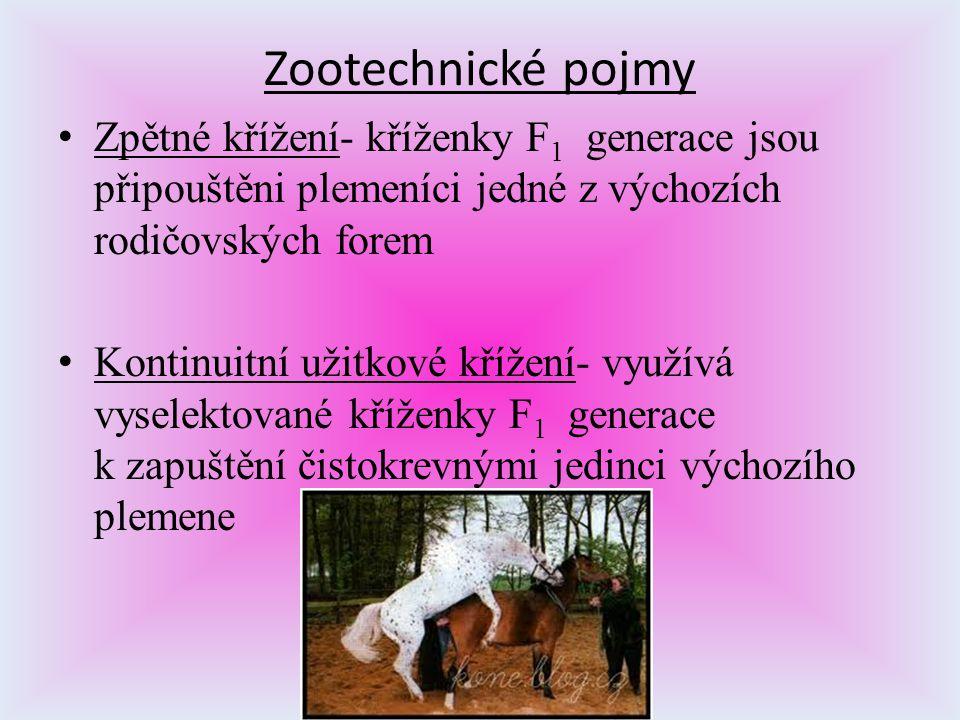 Zootechnické pojmy Zpětné křížení- kříženky F 1 generace jsou připouštěni plemeníci jedné z výchozích rodičovských forem Kontinuitní užitkové křížení-