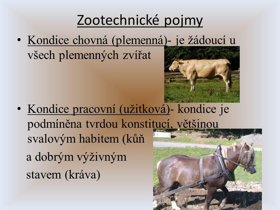 Zootechnické pojmy Kondice chovná (plemenná)- je žádoucí u všech plemenných zvířat Kondice pracovní (užitková)- kondice je podmíněna tvrdou konstitucí