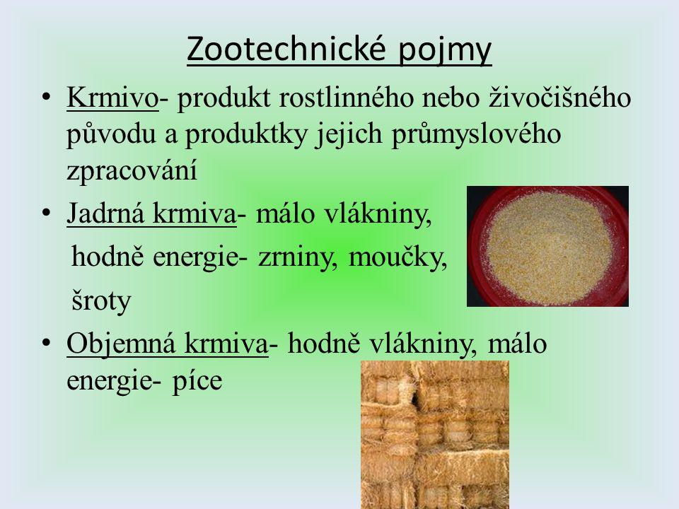 Zootechnické pojmy Krmivo- produkt rostlinného nebo živočišného původu a produktky jejich průmyslového zpracování Jadrná krmiva- málo vlákniny, hodně
