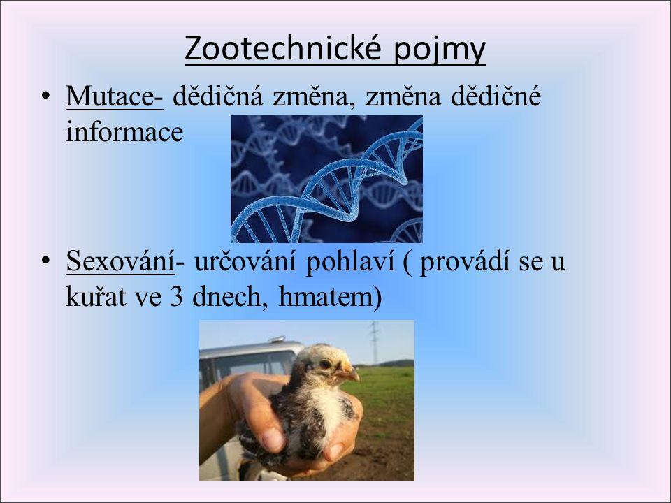 Zootechnické pojmy Mutace- dědičná změna, změna dědičné informace Sexování- určování pohlaví ( provádí se u kuřat ve 3 dnech, hmatem)