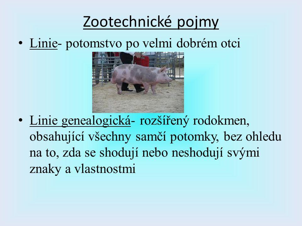 Zootechnické pojmy L inie- potomstvo po velmi dobrém otci L inie genealogická- rozšířený rodokmen, obsahující všechny samčí potomky, bez ohledu na to,