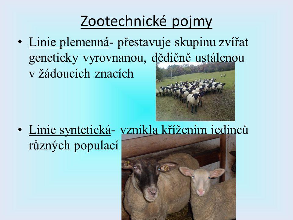 Linie plemenná- přestavuje skupinu zvířat geneticky vyrovnanou, dědičně ustálenou v žádoucích znacích Linie syntetická- vznikla křížením jedinců různý