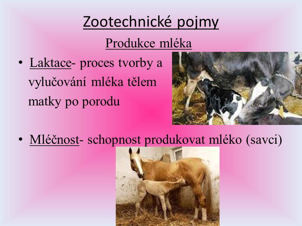 Zootechnické pojmy Produkce mléka Laktace- proces tvorby a vylučování mléka tělem matky po porodu Mléčnost- schopnost produkovat mléko (savci)