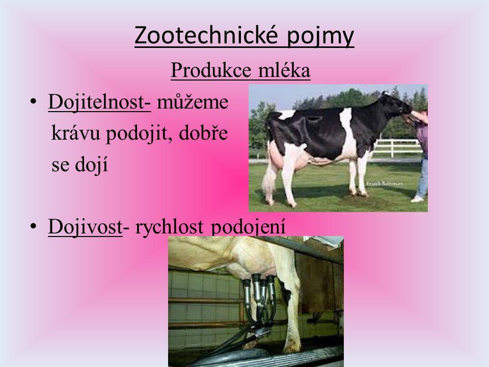 Zootechnické pojmy Produkce mléka Dojitelnost- můžeme krávu podojit, dobře se dojí Dojivost- rychlost podojení