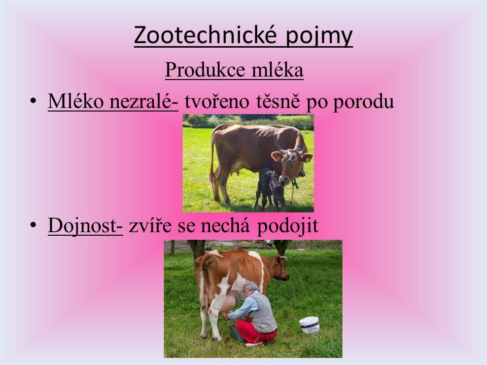 Zootechnické pojmy Produkce mléka Mléko nezralé- tvořeno těsně po porodu Dojnost- zvíře se nechá podojit