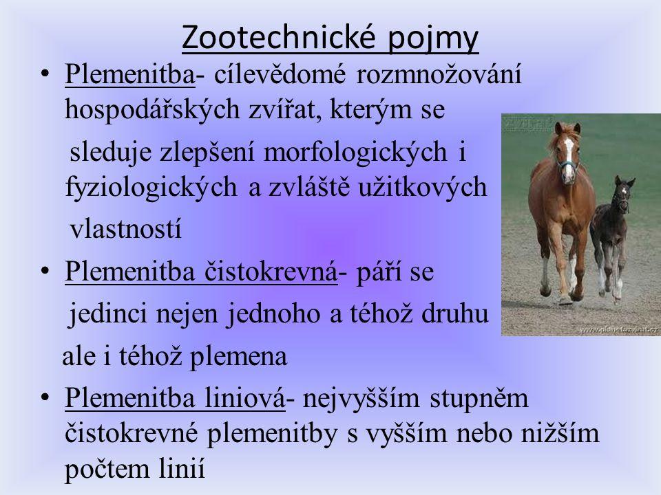 Zootechnické pojmy Plemenitba- cílevědomé rozmnožování hospodářských zvířat, kterým se sleduje zlepšení morfologických i fyziologických a zvláště užit