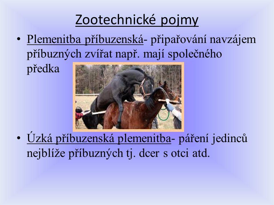 Zootechnické pojmy Plemenitba příbuzenská- připařování navzájem příbuzných zvířat např. mají společného předka Úzká příbuzenská plemenitba- páření jed