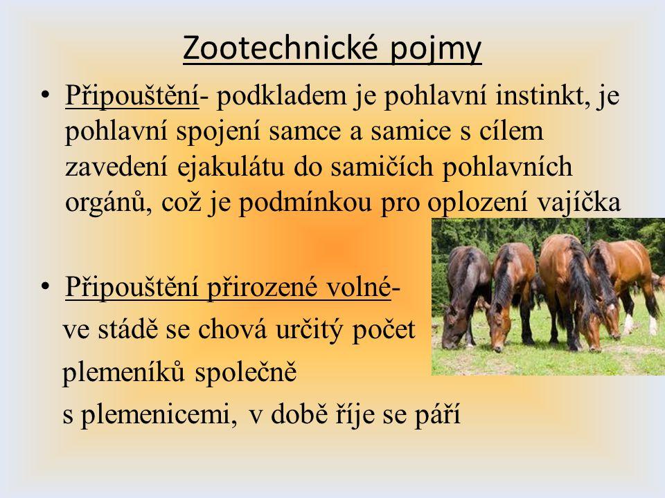 Zootechnické pojmy Připouštění- podkladem je pohlavní instinkt, je pohlavní spojení samce a samice s cílem zavedení ejakulátu do samičích pohlavních o
