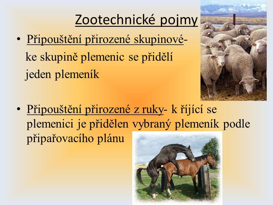 Zootechnické pojmy Připouštění přirozené skupinové- ke skupině plemenic se přidělí jeden plemeník Připouštění přirozené z ruky- k říjící se plemenici
