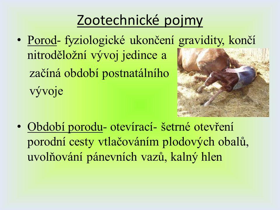Zootechnické pojmy Porod- fyziologické ukončení gravidity, končí nitroděložní vývoj jedince a začíná období postnatálního vývoje Období porodu- otevír