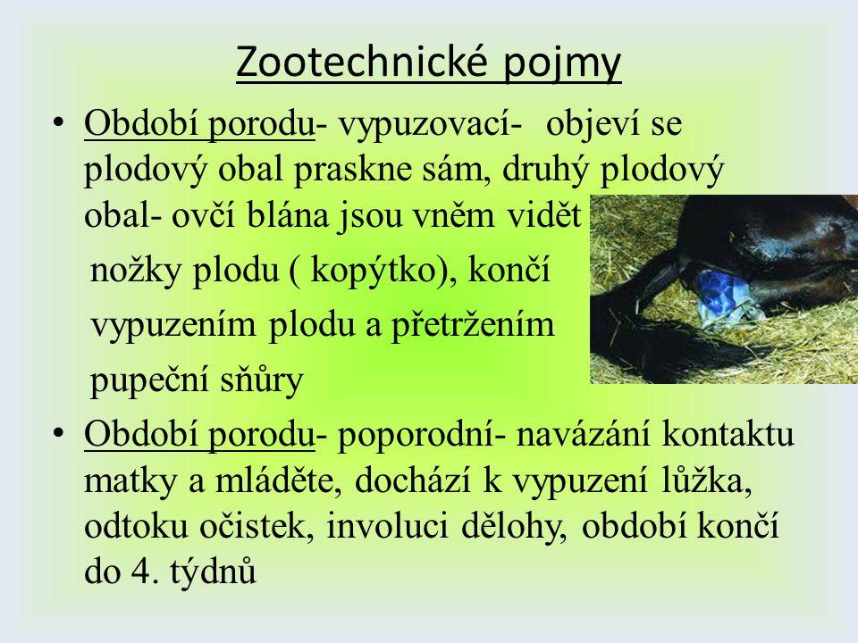 Zootechnické pojmy Období porodu- vypuzovací- objeví se plodový obal praskne sám, druhý plodový obal- ovčí blána jsou vněm vidět nožky plodu ( kopýtko