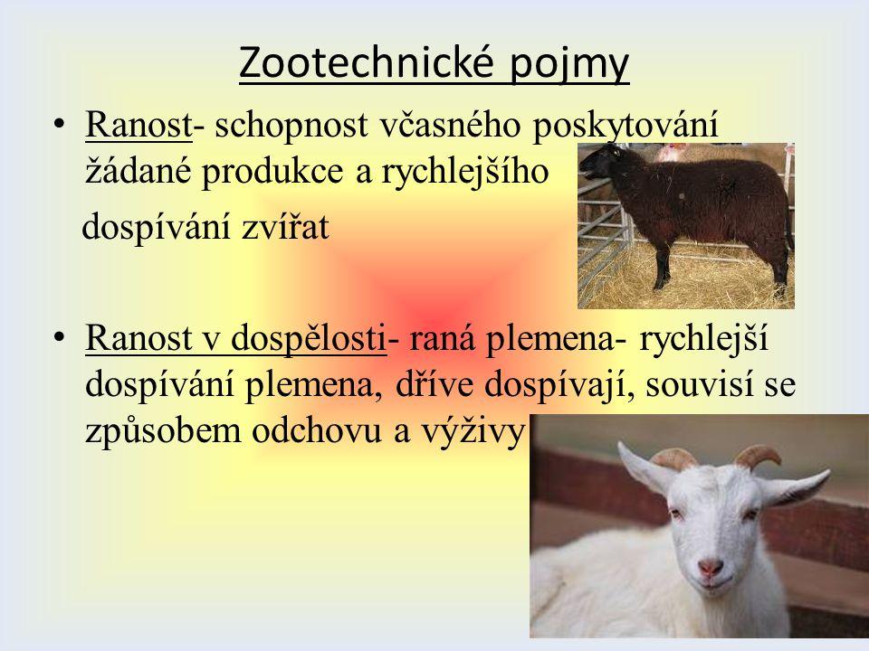 Zootechnické pojmy Ranost- schopnost včasného poskytování žádané produkce a rychlejšího dospívání zvířat Ranost v dospělosti- raná plemena- rychlejší