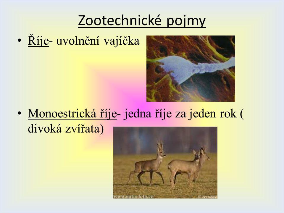 Zootechnické pojmy Ř íje- uvolnění vajíčka M onoestrická říje- jedna říje za jeden rok ( divoká zvířata)