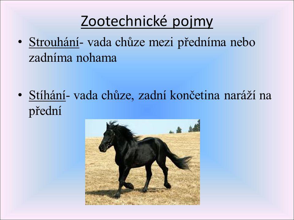 Zootechnické pojmy Strouhání- vada chůze mezi předníma nebo zadníma nohama Stíhání- vada chůze, zadní končetina naráží na přední