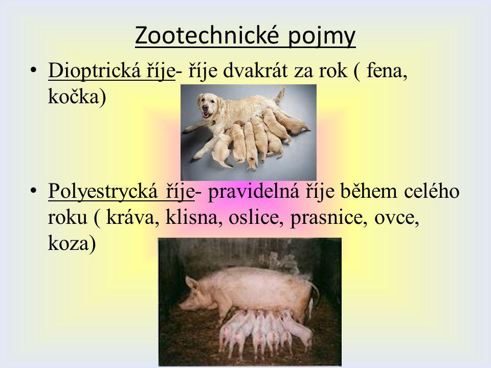 Dioptrická říje- říje dvakrát za rok ( fena, kočka) Polyestrycká říje- pravidelná říje během celého roku ( kráva, klisna, oslice, prasnice, ovce, koza