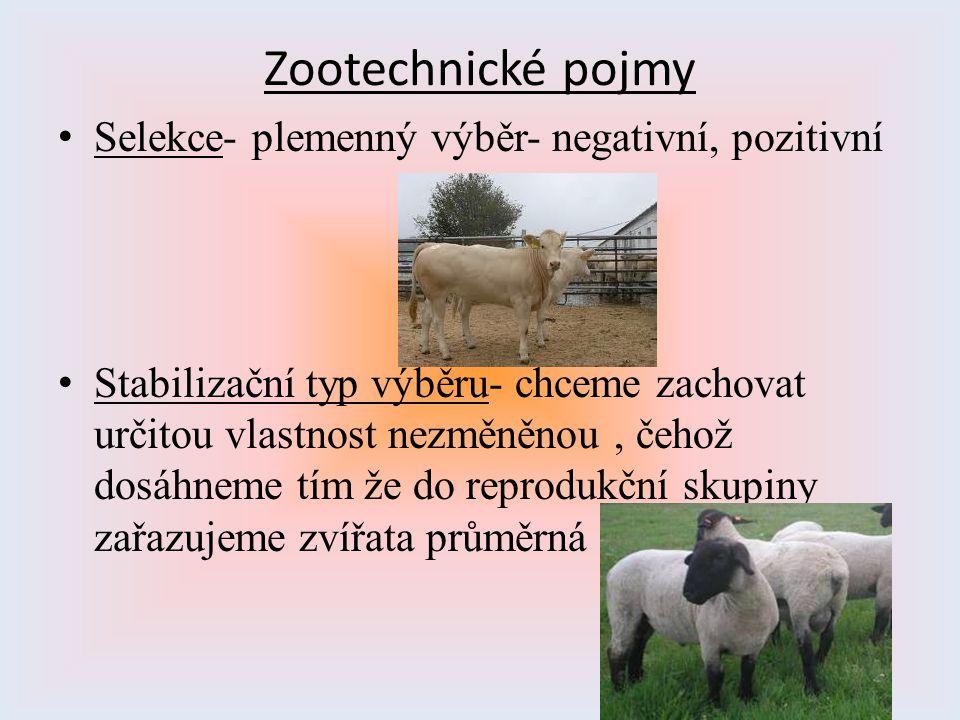 Zootechnické pojmy Selekce- plemenný výběr- negativní, pozitivní Stabilizační typ výběru- chceme zachovat určitou vlastnost nezměněnou, čehož dosáhnem