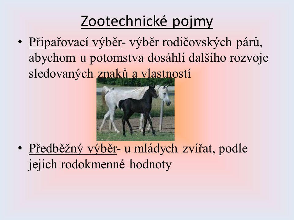 Zootechnické pojmy Připařovací výběr- výběr rodičovských párů, abychom u potomstva dosáhli dalšího rozvoje sledovaných znaků a vlastností Předběžný vý