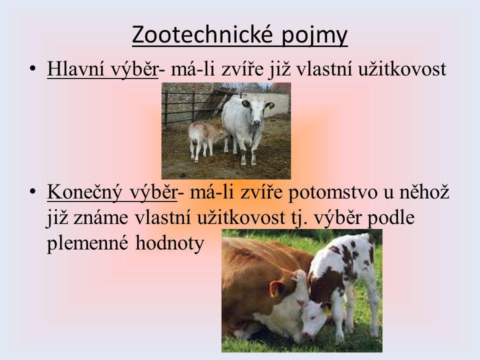 Zootechnické pojmy Hlavní výběr- má-li zvíře již vlastní užitkovost Konečný výběr- má-li zvíře potomstvo u něhož již známe vlastní užitkovost tj. výbě