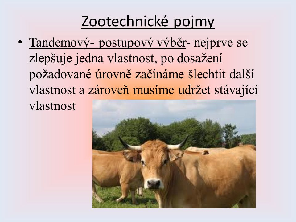Zootechnické pojmy Tandemový- postupový výběr- nejprve se zlepšuje jedna vlastnost, po dosažení požadované úrovně začínáme šlechtit další vlastnost a