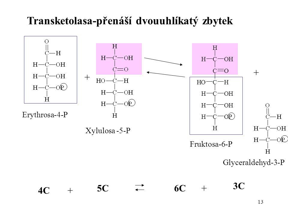 13 Transketolasa-přenáší dvouuhlíkatý zbytek Erythrosa-4-P + Xylulosa -5-P + Fruktosa-6-P Glyceraldehyd-3-P C C C C C H OH OP HO H H C O OH H H OHH H