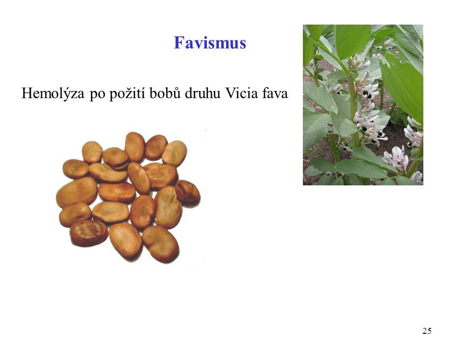 25 Favismus Hemolýza po požití bobů druhu Vicia fava