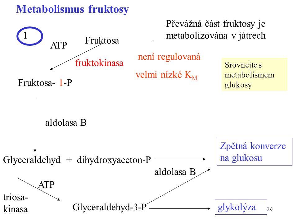 29 Metabolismus fruktosy Fruktosa Fruktosa- 1-P fruktokinasa aldolasa B Glyceraldehyd + dihydroxyaceton-P Glyceraldehyd-3-P triosa- kinasa ATP glykolý