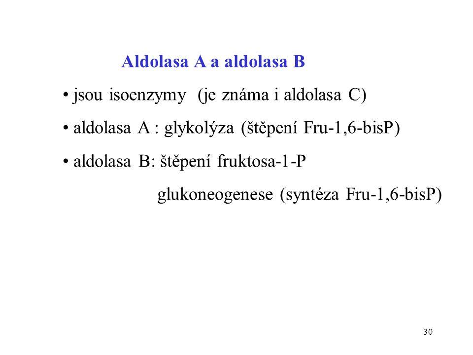 30 Aldolasa A a aldolasa B • jsou isoenzymy (je známa i aldolasa C) • aldolasa A : glykolýza (štěpení Fru-1,6-bisP) • aldolasa B: štěpení fruktosa-1-P