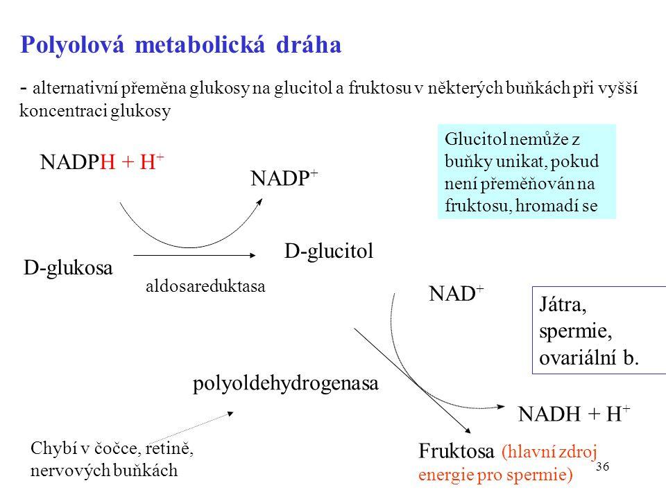 36 Polyolová metabolická dráha - alternativní přeměna glukosy na glucitol a fruktosu v některých buňkách při vyšší koncentraci glukosy D-glukosa NADPH